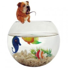 Sell Fish tank-Take a break-featured aquarium