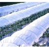 Tunnel Greenhouse Film EJ-201