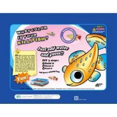 Aquarium educational science kit- What Color is your Killifish