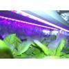 Plant growing light