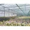 Cellophane Greenhouse