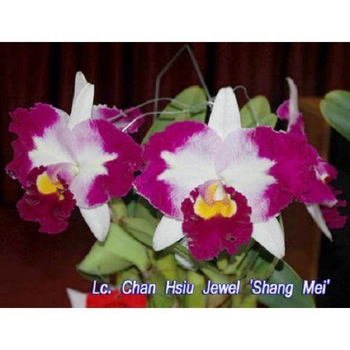 Lc. Chan Hsiu Jewel 'Shang Mei'