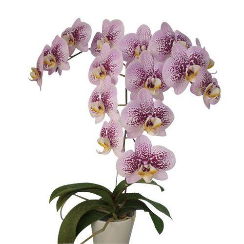 Ornamental Plants 271