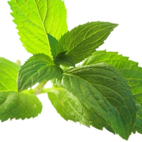 Menthol Essential Oil Plaster (Cool Type)