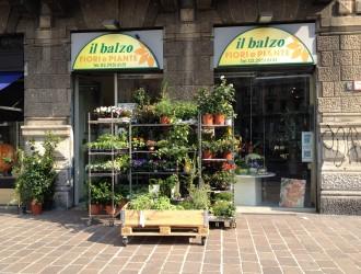 義大利花卉產業發達 平價盆栽前景看好