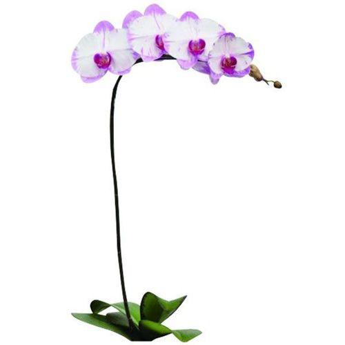 Yu Pin Sweety A08521 - Phalaenopsis