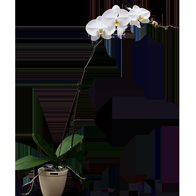 Orchid V3