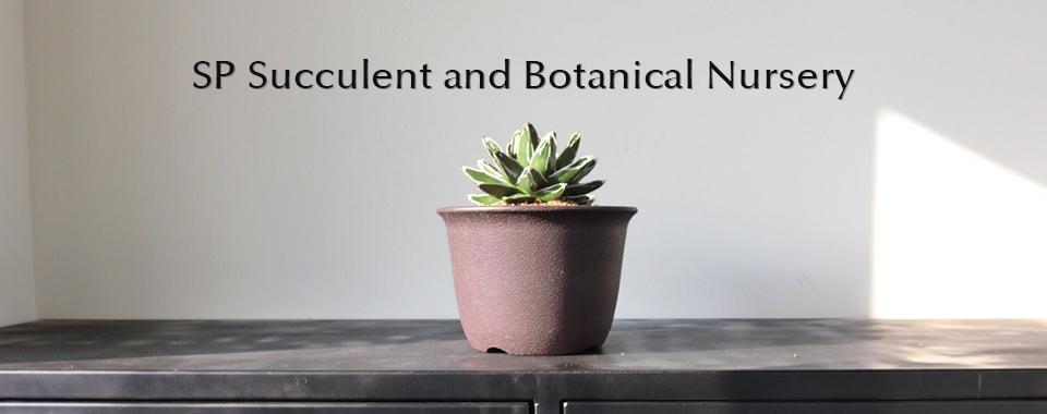 SP Succulent & Botanical Nursery   SP多肉植物