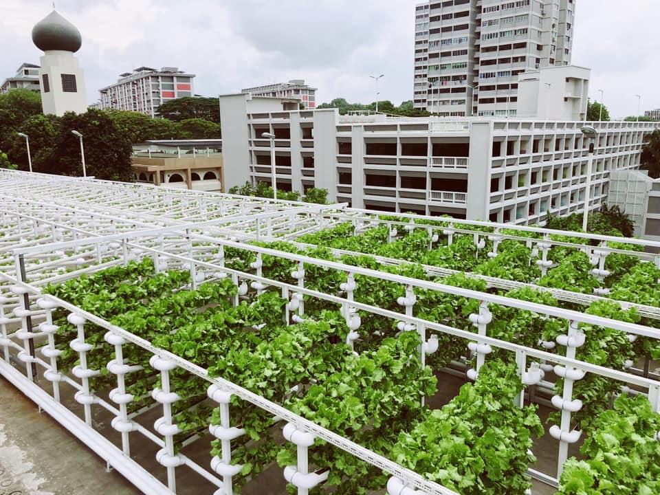 新加坡停車場變身現代化菜園,一年產量可供千人食用